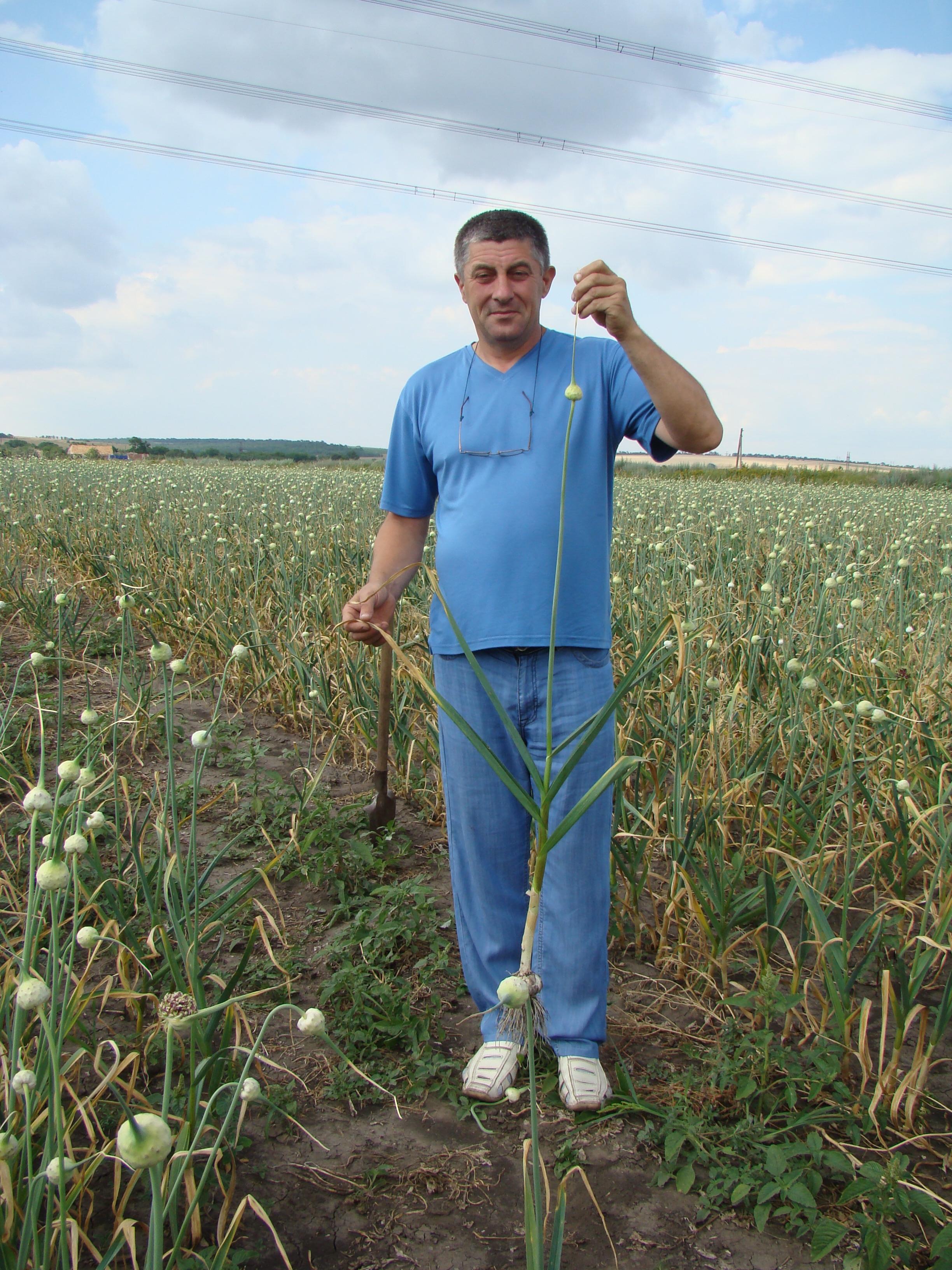 Erzeuger der Sorte Ljubascha - Ivan Zakharenko,